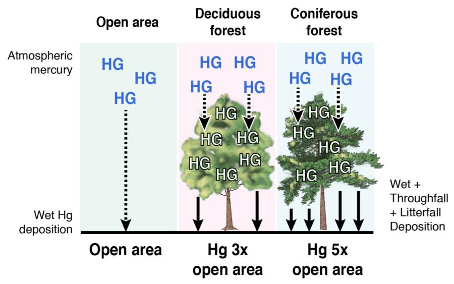 Conifer Hypothesis