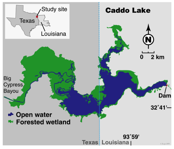 Caddo Lake Study Site Map