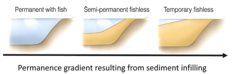 Pond Permanence gradient